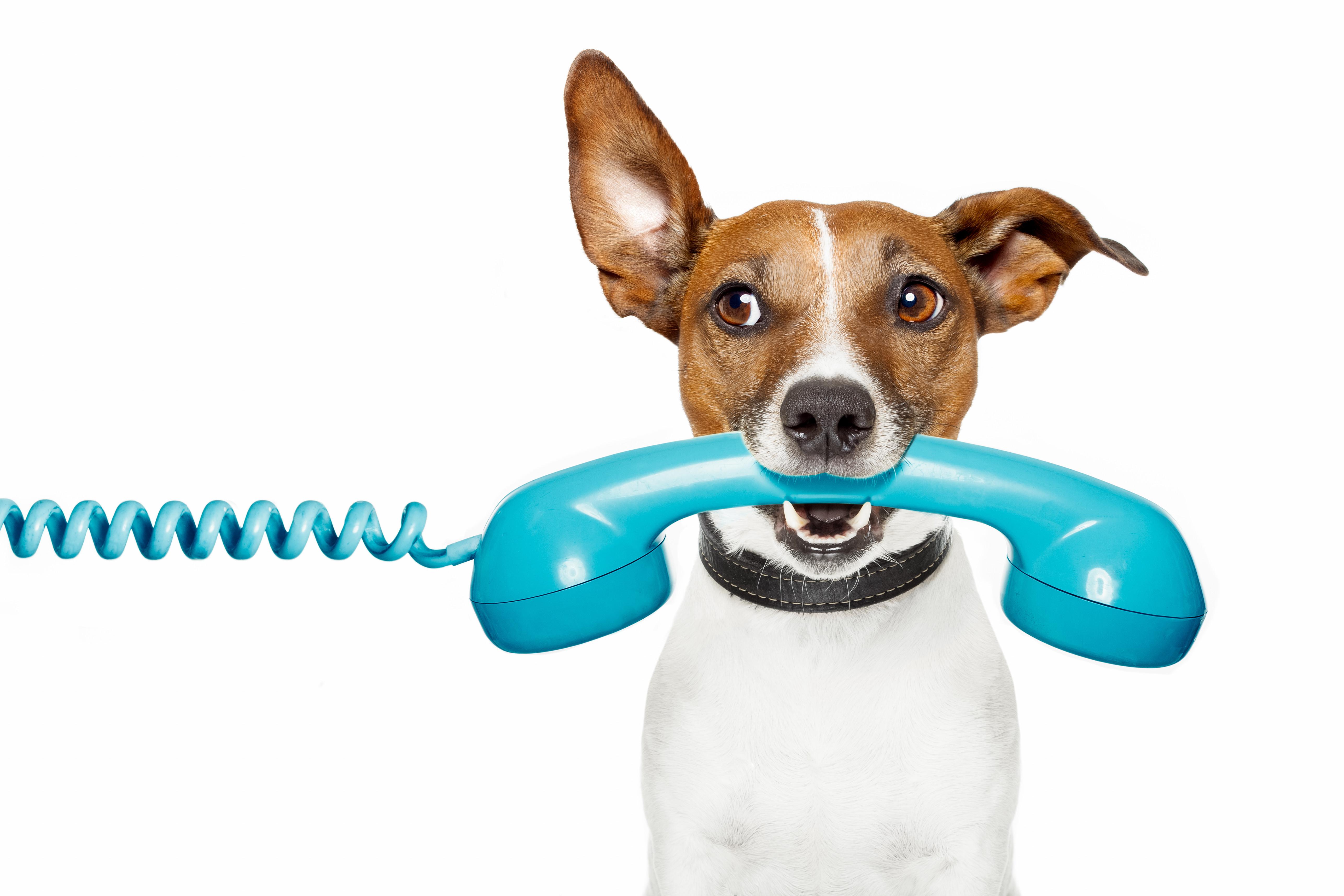 New Client Phone Consultation
