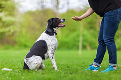 woman gives a command to her mixed breed