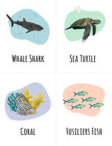 Animal-cards-front.jpg