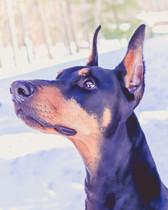 Dog Potrait