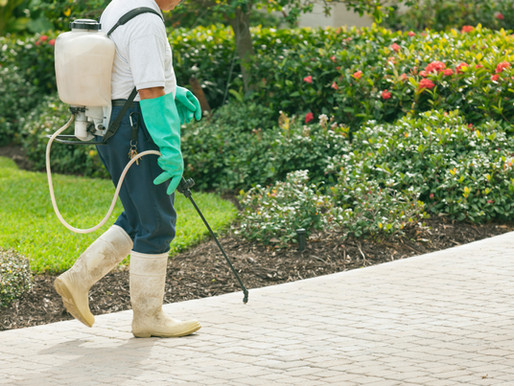 Does Your Home Needs Pest Control?