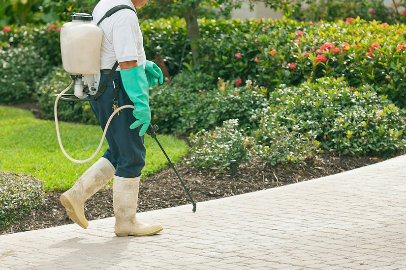 Contact local bug guy for pest control in Spanish Fork