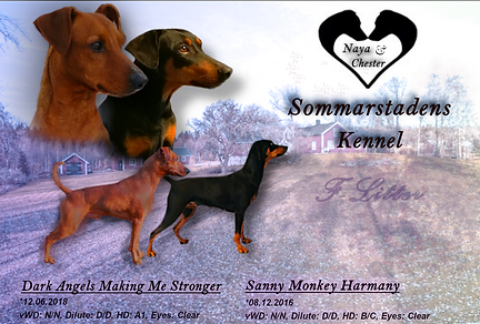Chester_Naya_Litter_Ad.png