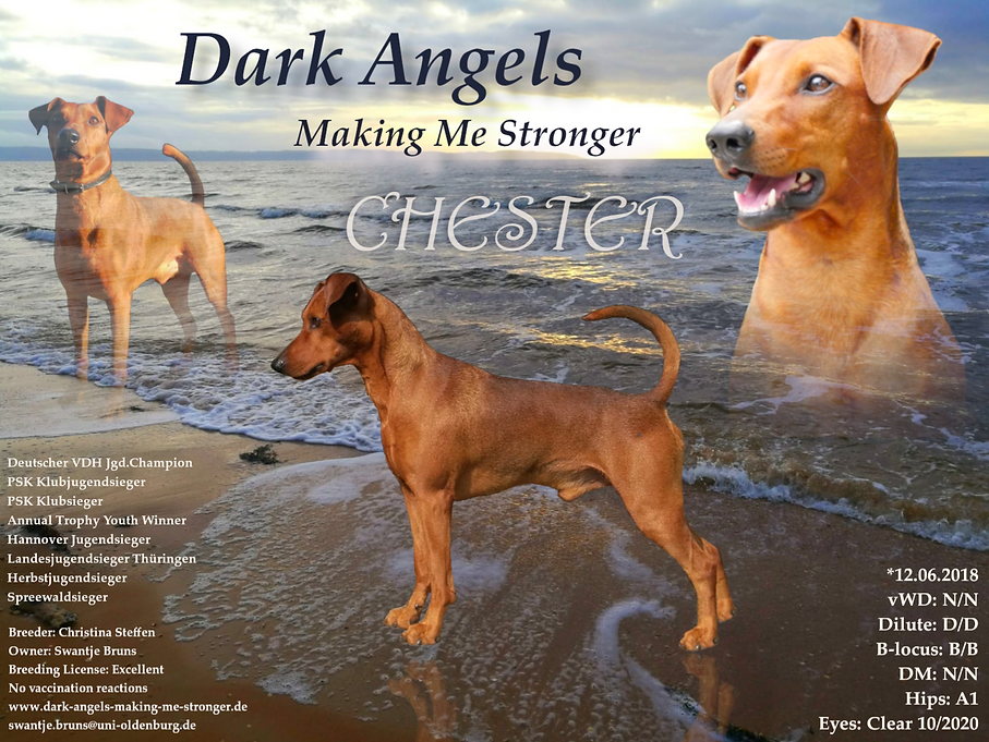 Chester_Collage_ .png