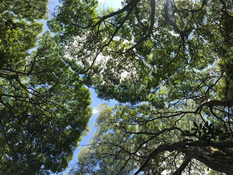 Vejo rios entre copas de árvores