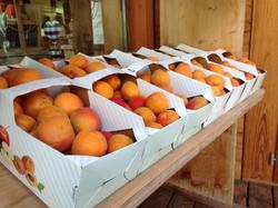 Abricot_Valais_emballage