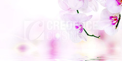 Credence_cuisine_orchidee