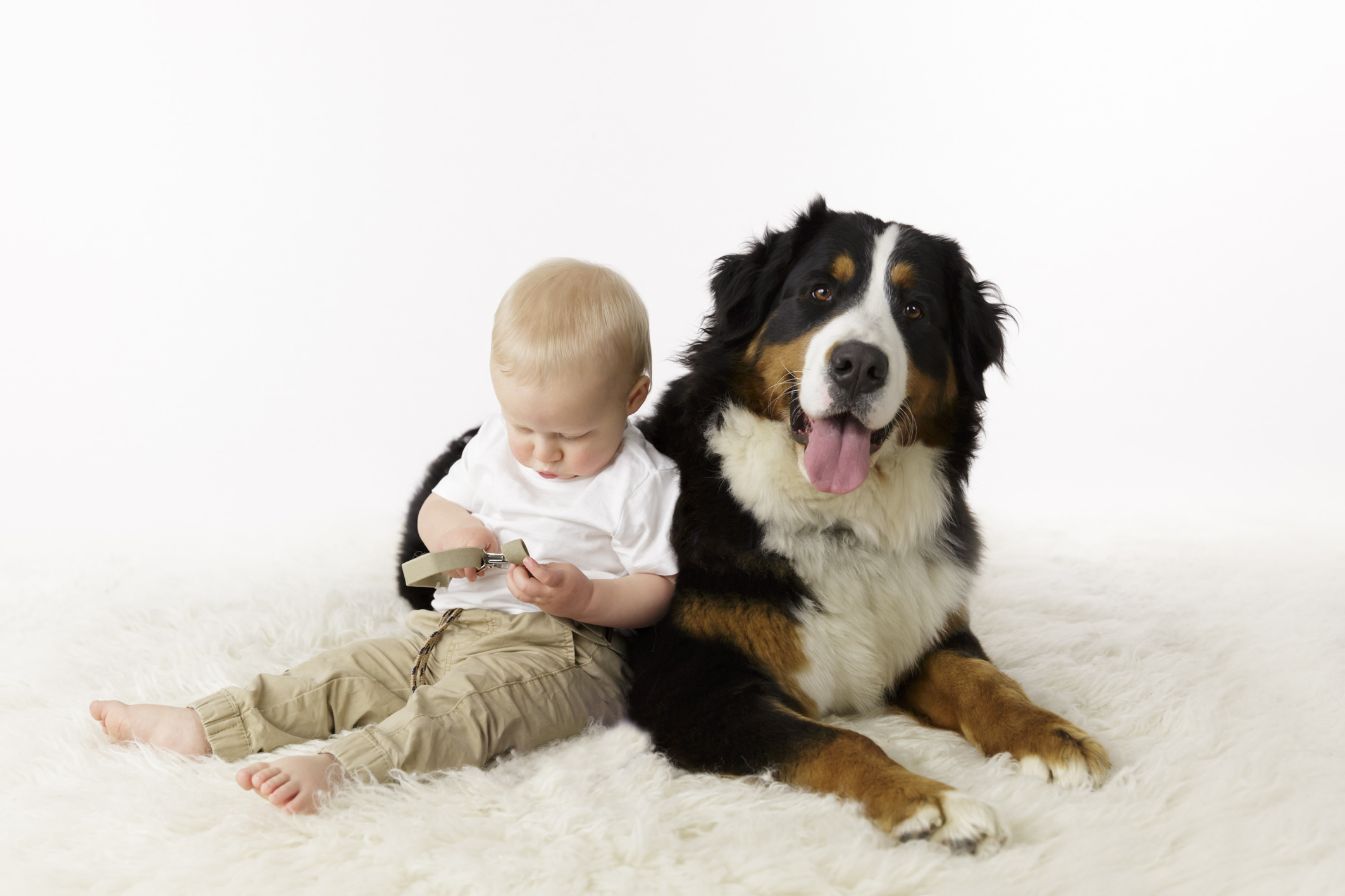mountain Bernese dog with baby