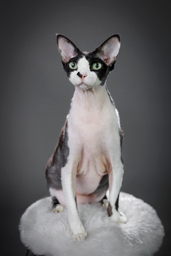 Cat Photographer Melbourne
