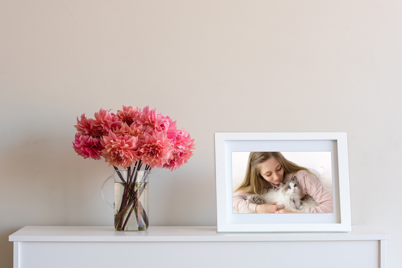 Pet Photos Melbourne Eastern Suburbs