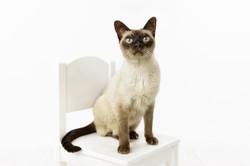 Cat portraits Melbourne