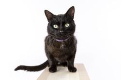 cat studio portrait