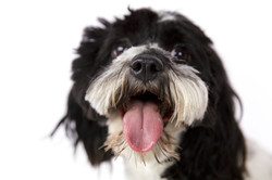close up dog nose