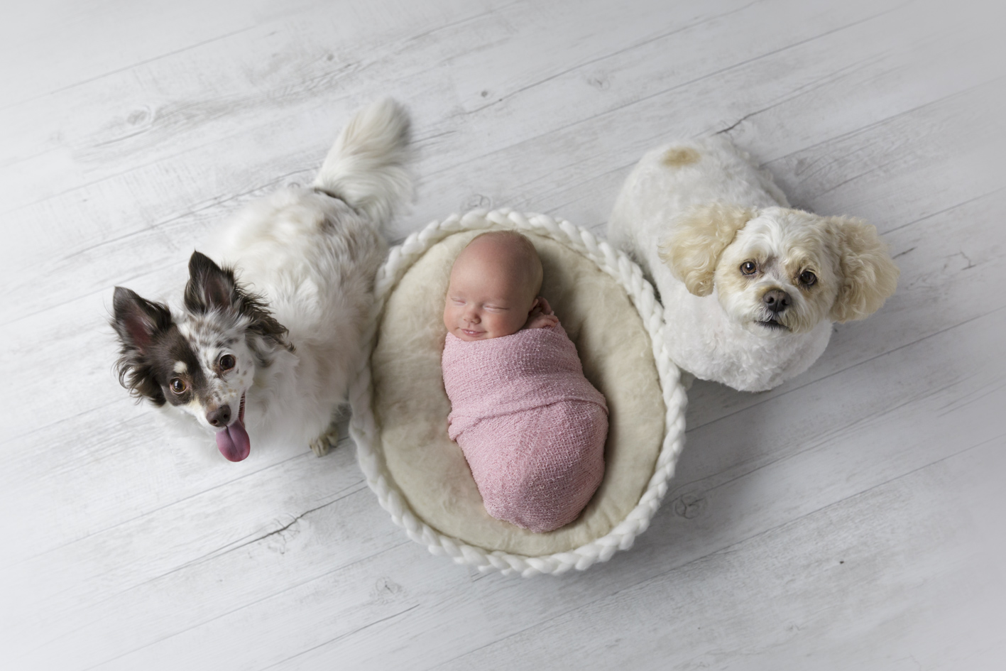 newborn baby with dogs