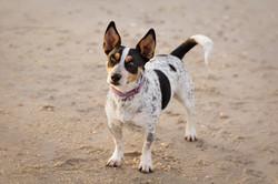 pet photography on beach