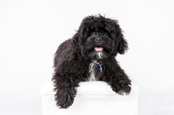 puppy professional photo