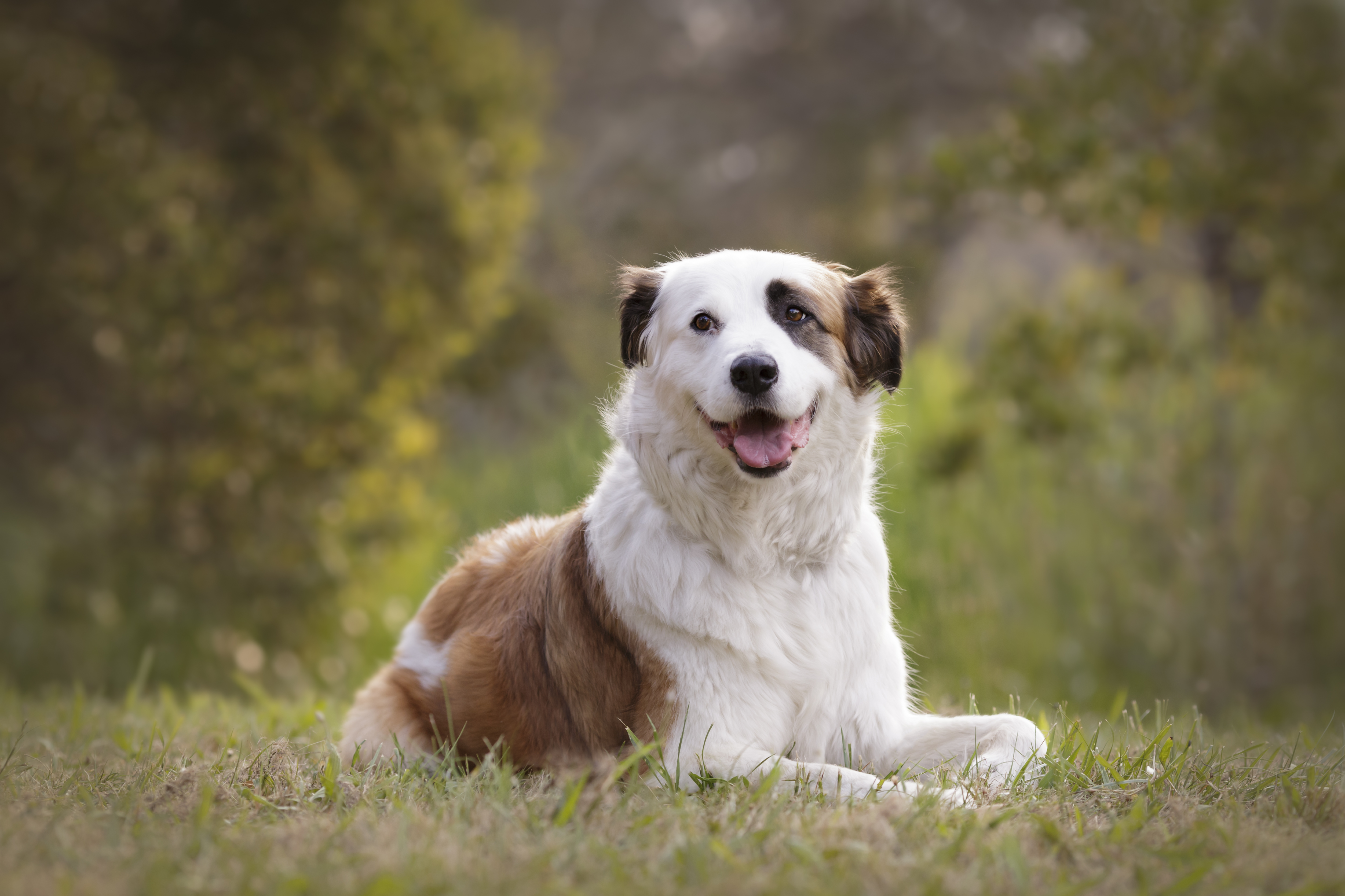 Professional Dog Photography