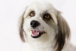 dog photographer melbourne east