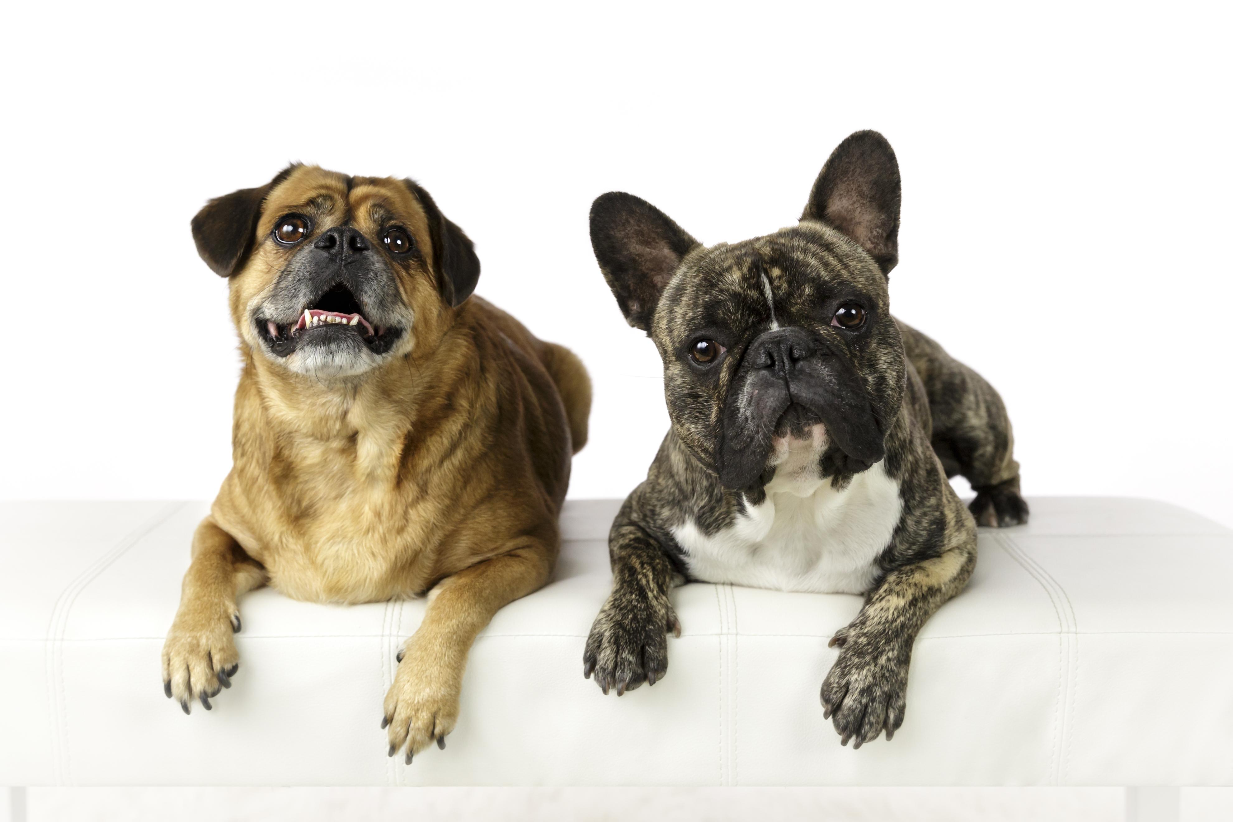 dog best friends
