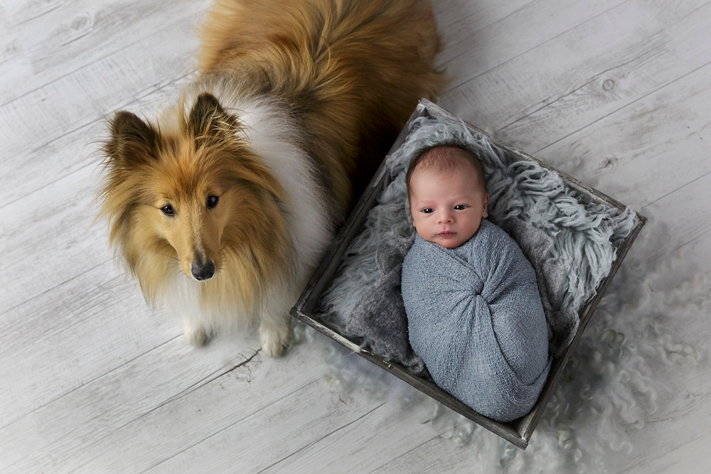 baby photos with pets