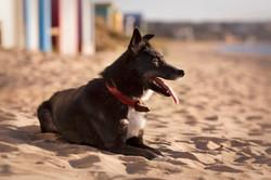 dog photography on beach