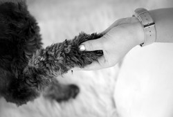 dog paw in hand