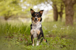 Outdoor Pet Photography