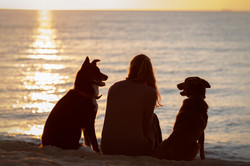 beach silhouette owner with dogs