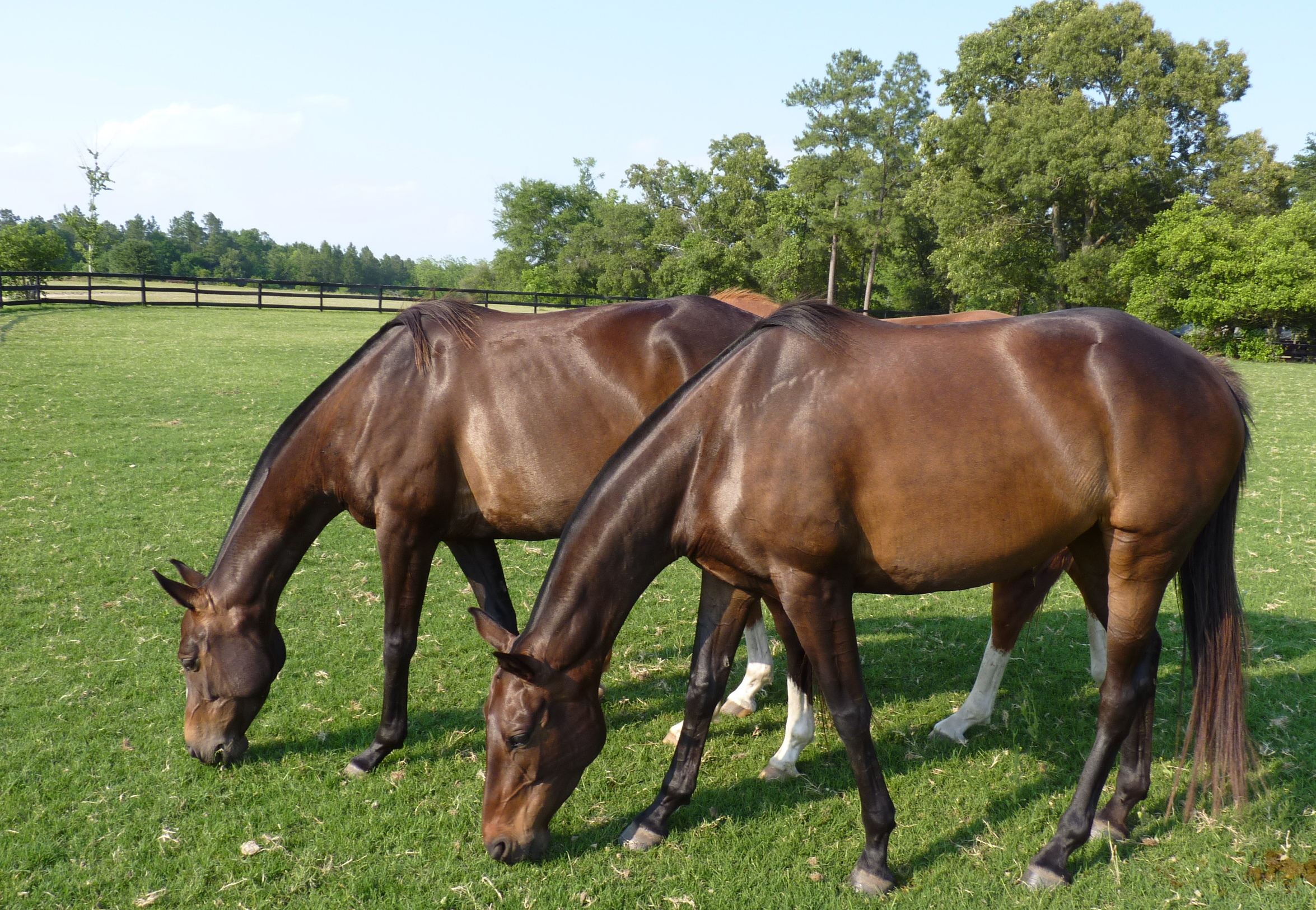 220 Acre Breeding/ Training Facility
