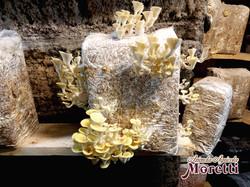 Fungaia-Moretti-Funghi-Grotta-5.jpg