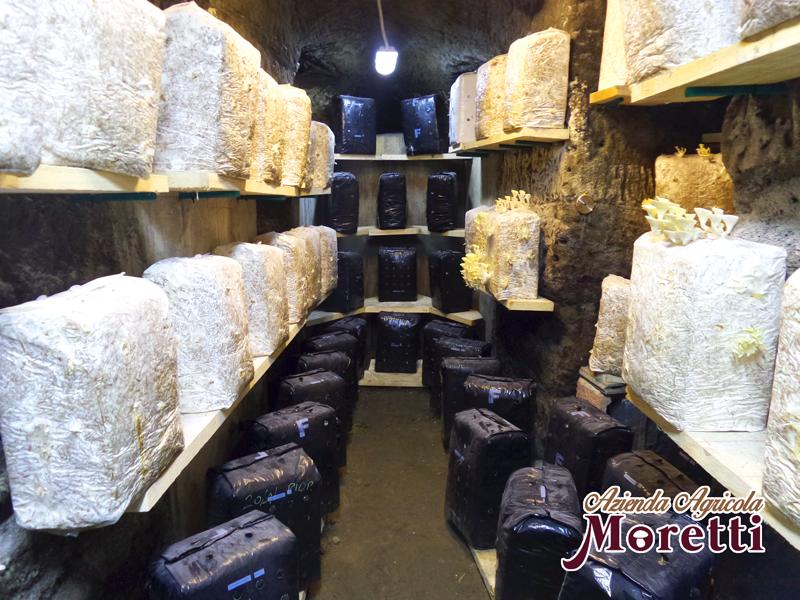 Fungaia-Moretti-Galleria-Grotta-6.jpg