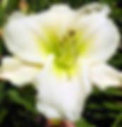 White Perfection - GBBG_jpg_jpg.jpg