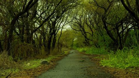Green Trail Vashi