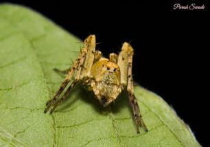 Spider at Behind Vashi Railway Station