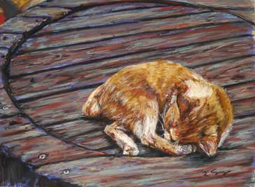The Lazy Stray Cat