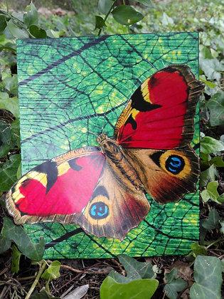 Postal de mariposas 4
