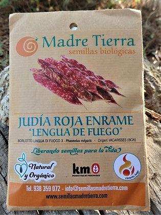 "Judía Roja Enrame ""Lengua de Fuego"""