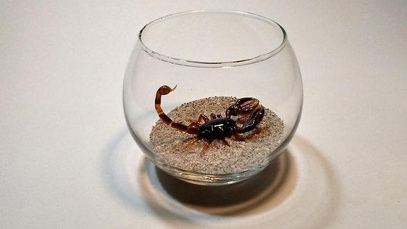 Escorpión vidrio reciclado