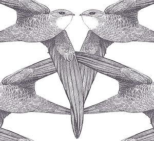 white-birds.jpg