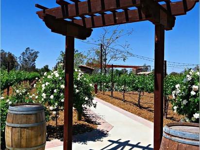 Beautiful Scenery - Temecula Wine Country