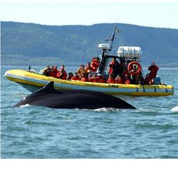 Excursions aux baleines