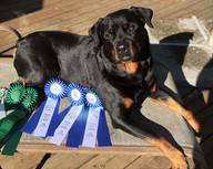 The Mo soaking up the sun with her rosettes from the weekend!! LOVE my Dinah mo!!