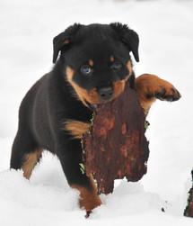 baby dinah 8 weeks old2.jpg