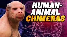 Human Animal Chimeras: US Senate OPPOSES Ban