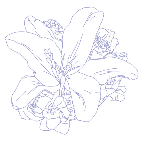 lily_line_art-01.png