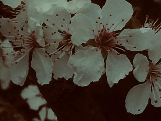 La vie de Ada - Récit 28 - Les fleurs d'Elsa -