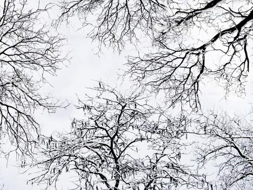 La vie de Ada - Récit 34 - On dit qu'en hiver, la chaleur est dans le cœur -