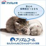 犬猫バナー四角(保障割合100%).jpg