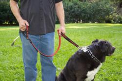 ロックストラップ 犬用リード