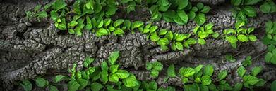 wood-1350175_1280.jpg